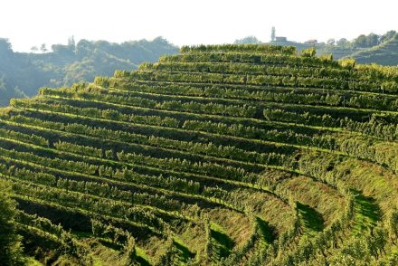Weinbau-Landschaft in der Steiermark und Slowenien